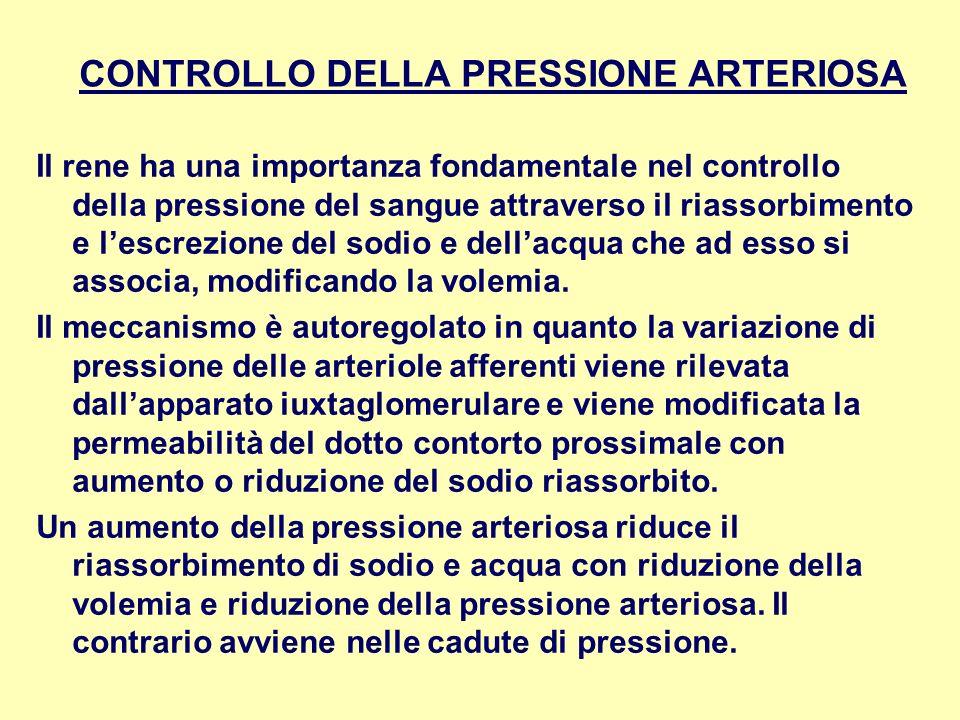 CONTROLLO DELLA PRESSIONE ARTERIOSA Il rene ha una importanza fondamentale nel controllo della pressione del sangue attraverso il riassorbimento e les
