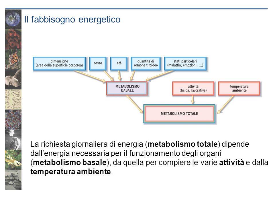 Il fabbisogno energetico La richiesta giornaliera di energia (metabolismo totale) dipende dallenergia necessaria per il funzionamento degli organi (me