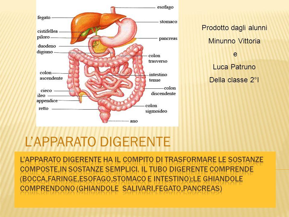 Nella bocca avviene il primo procedimento di digestione.