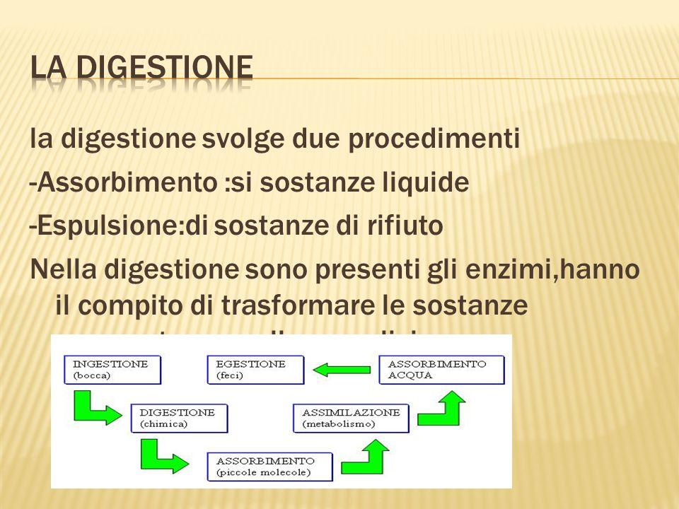 la digestione svolge due procedimenti -Assorbimento :si sostanze liquide -Espulsione:di sostanze di rifiuto Nella digestione sono presenti gli enzimi,hanno il compito di trasformare le sostanze composte a quelle semplici.