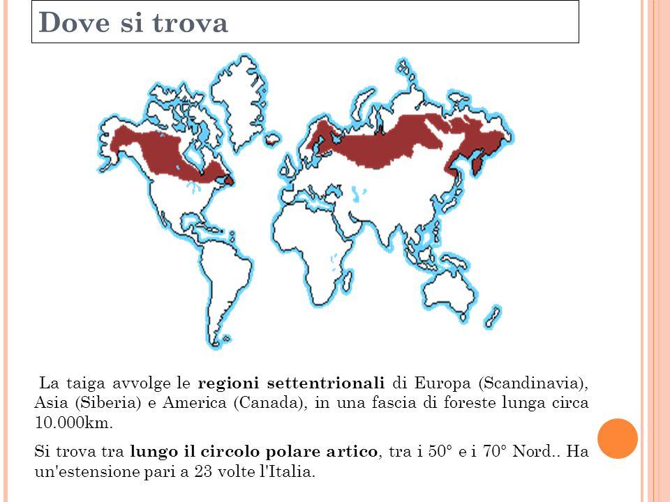 Dove si trova La taiga avvolge le regioni settentrionali di Europa (Scandinavia), Asia (Siberia) e America (Canada), in una fascia di foreste lunga ci