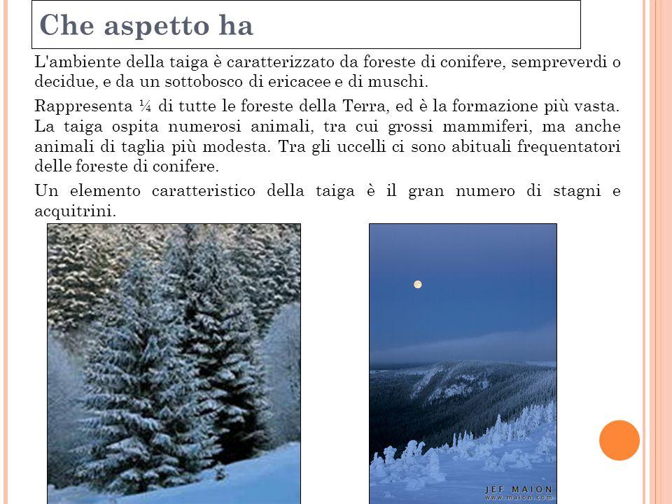 Clima temperatureDinverno le temperature scendono anche fino a 20-30 gradi sotto lo zero.