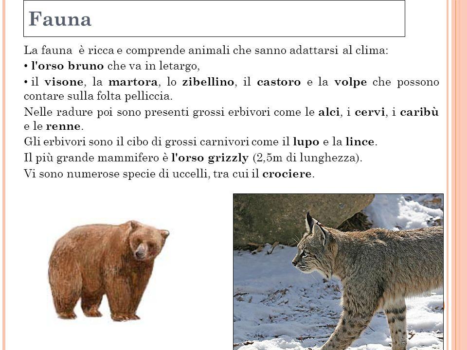 Fauna La fauna è ricca e comprende animali che sanno adattarsi al clima: l'orso bruno che va in letargo, il visone, la martora, lo zibellino, il casto