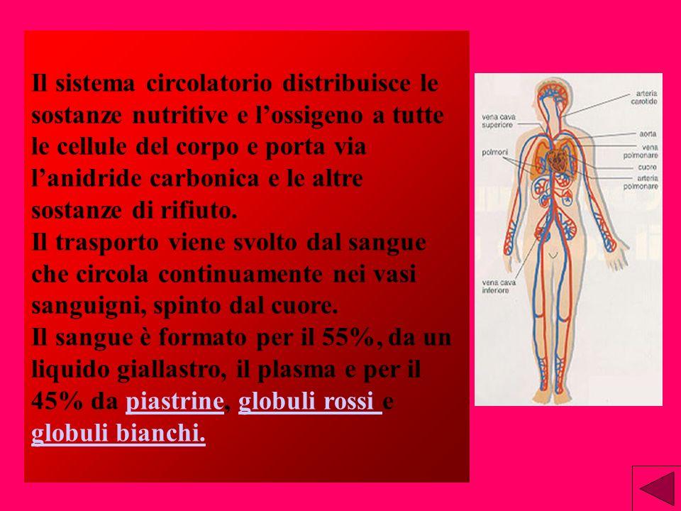 1.Gli atri si contraggono spingendo il sangue nei ventricoli. 2.Il sangue venoso entra nell atrio destro mentre latrio sinistro si riempie di sangue a