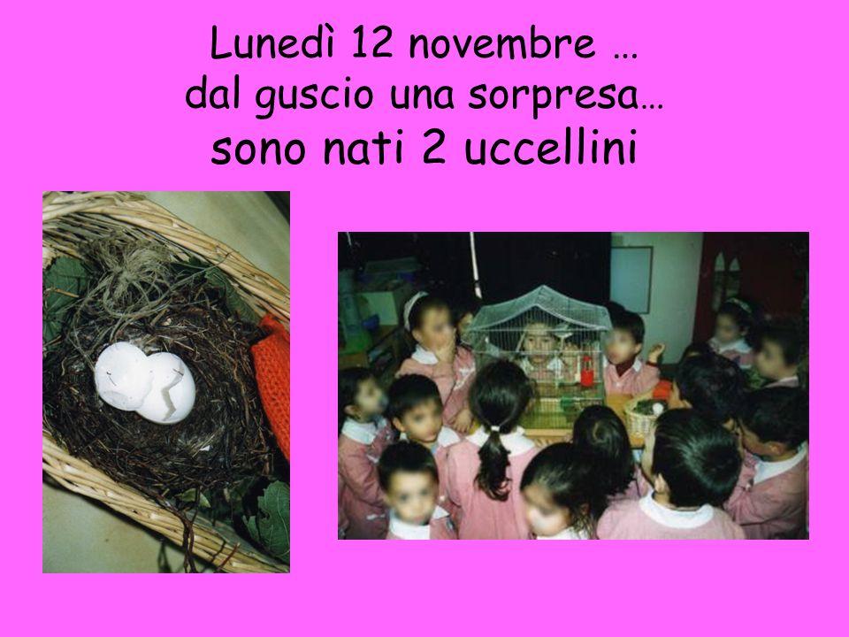 Lunedì 12 novembre … dal guscio una sorpresa … sono nati 2 uccellini