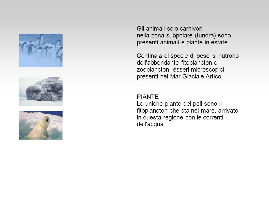 Gli animali solo carnivori nella zona subpolare (tundra) sono presenti animali e piante in estate. Centinaia di specie di pesci si nutrono dell'abbond
