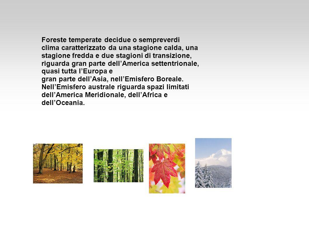 Foreste temperate decidue o sempreverdi clima caratterizzato da una stagione calda, una stagione fredda e due stagioni di transizione, riguarda gran p