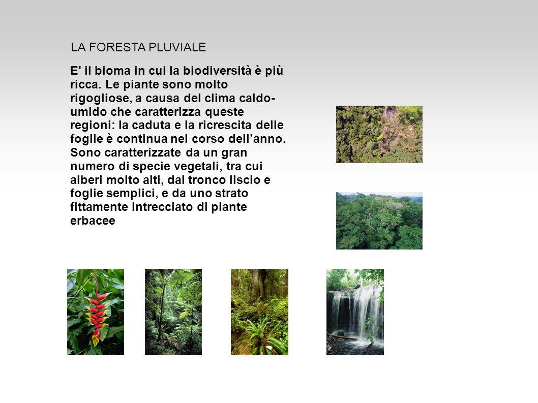 E' il bioma in cui la biodiversità è più ricca. Le piante sono molto rigogliose, a causa del clima caldo- umido che caratterizza queste regioni: la ca