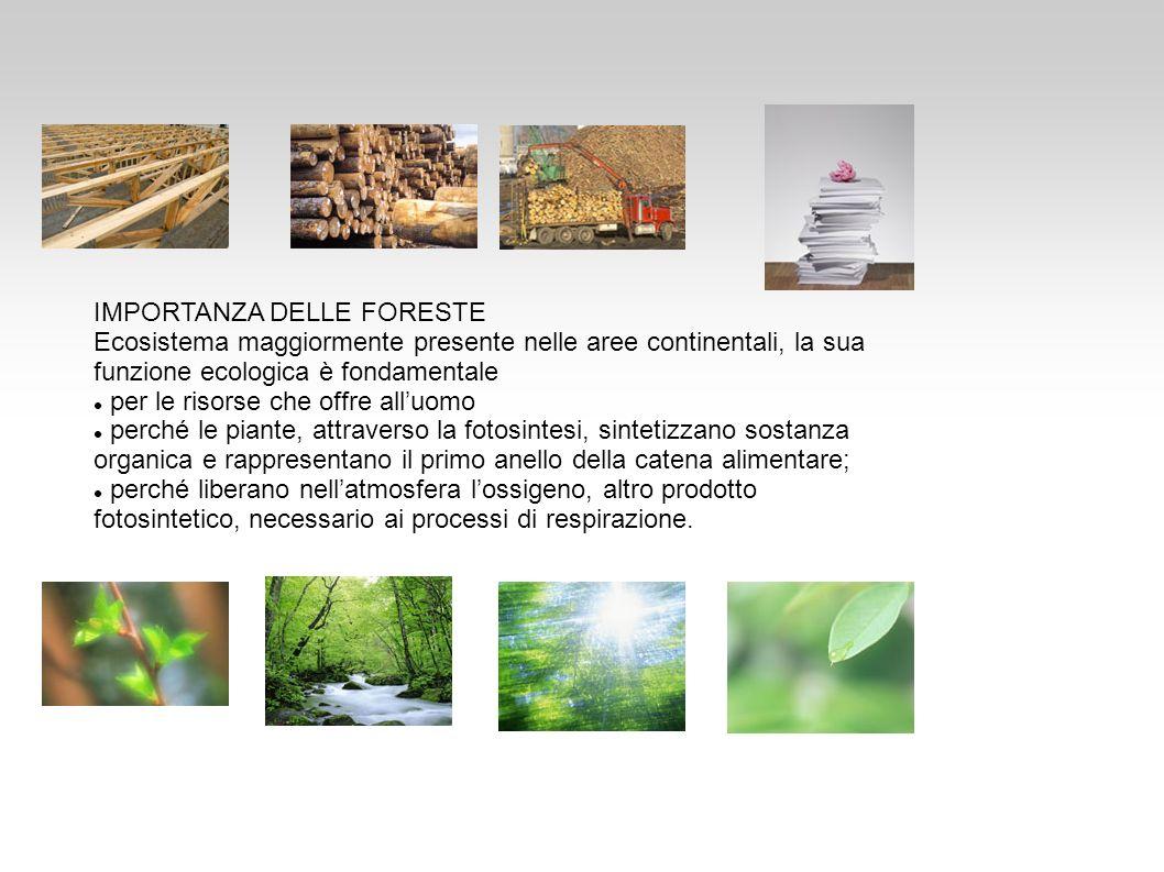 IMPORTANZA DELLE FORESTE Ecosistema maggiormente presente nelle aree continentali, la sua funzione ecologica è fondamentale per le risorse che offre a