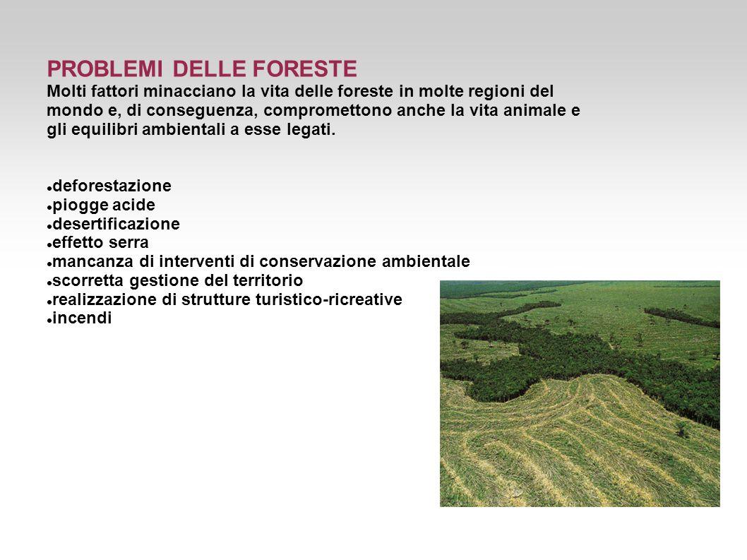 PROBLEMI DELLE FORESTE Molti fattori minacciano la vita delle foreste in molte regioni del mondo e, di conseguenza, compromettono anche la vita animal