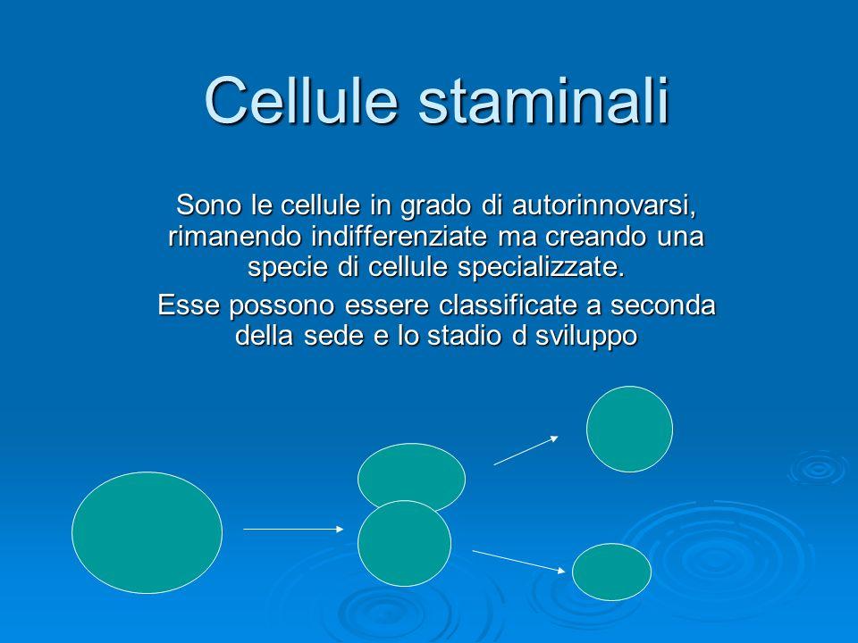 Cellule staminali Sono le cellule in grado di autorinnovarsi, rimanendo indifferenziate ma creando una specie di cellule specializzate. Esse possono e