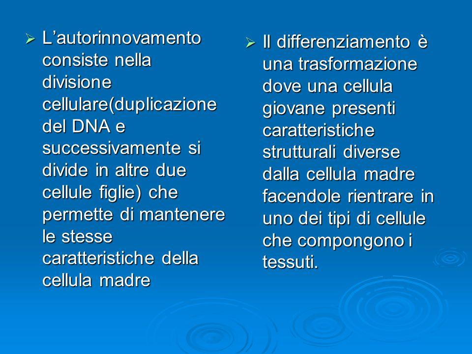 Lautorinnovamento consiste nella divisione cellulare(duplicazione del DNA e successivamente si divide in altre due cellule figlie) che permette di man