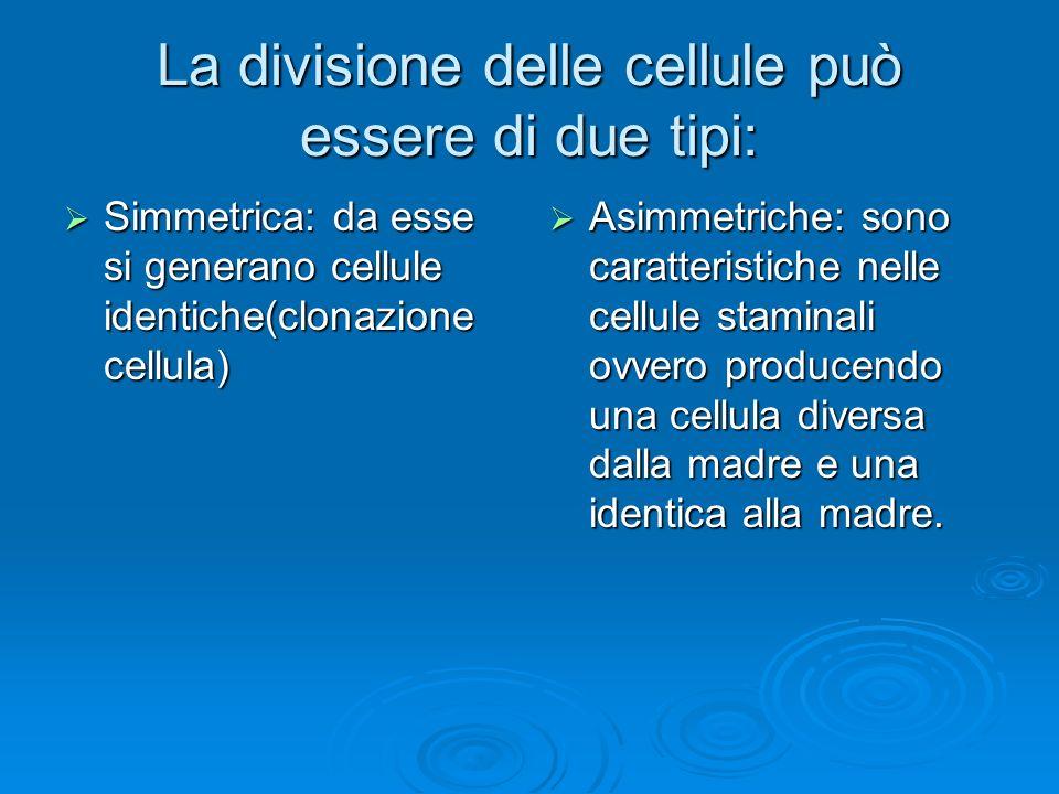 La divisione delle cellule può essere di due tipi: Simmetrica: da esse si generano cellule identiche(clonazione cellula) Simmetrica: da esse si genera