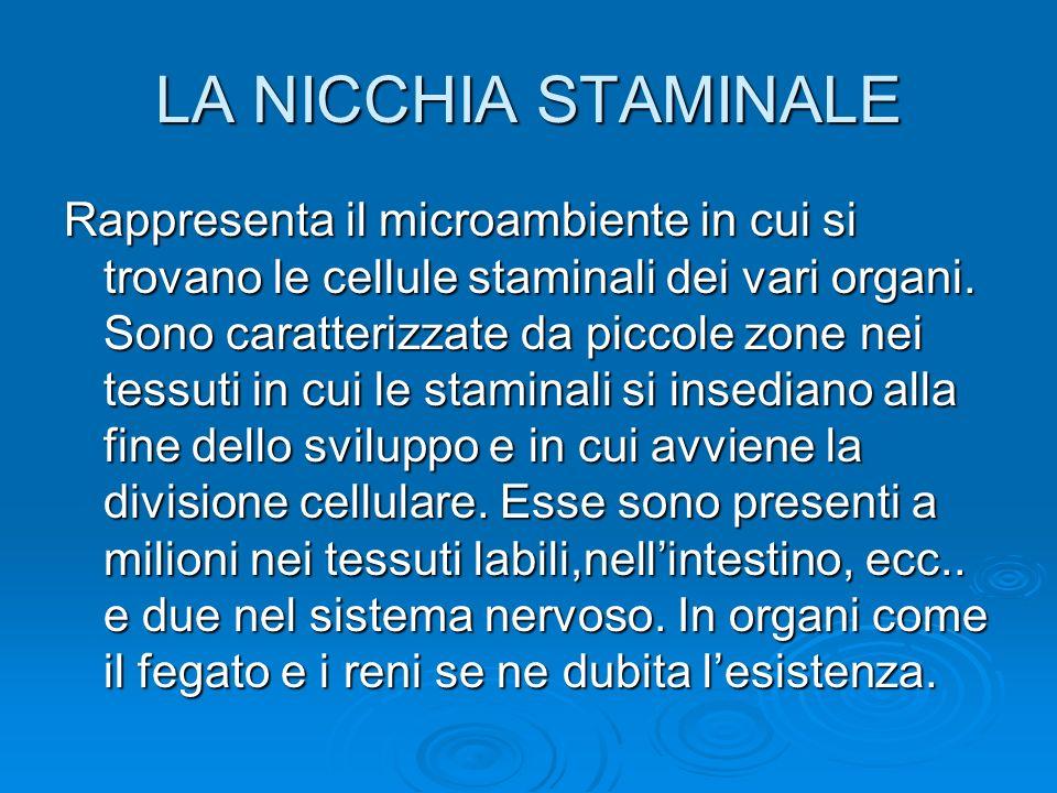 LA NICCHIA STAMINALE Rappresenta il microambiente in cui si trovano le cellule staminali dei vari organi. Sono caratterizzate da piccole zone nei tess