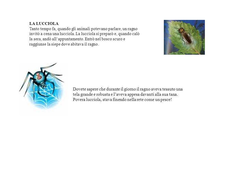 LA LUCCIOLA Tanto tempo fa, quando gli animali potevano parlare, un ragno invitò a cena una lucciola. La lucciola si preparò e, quando calò la sera, a