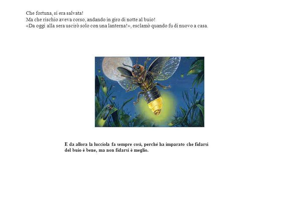 I link La lucciola il ragno e la ragnatela