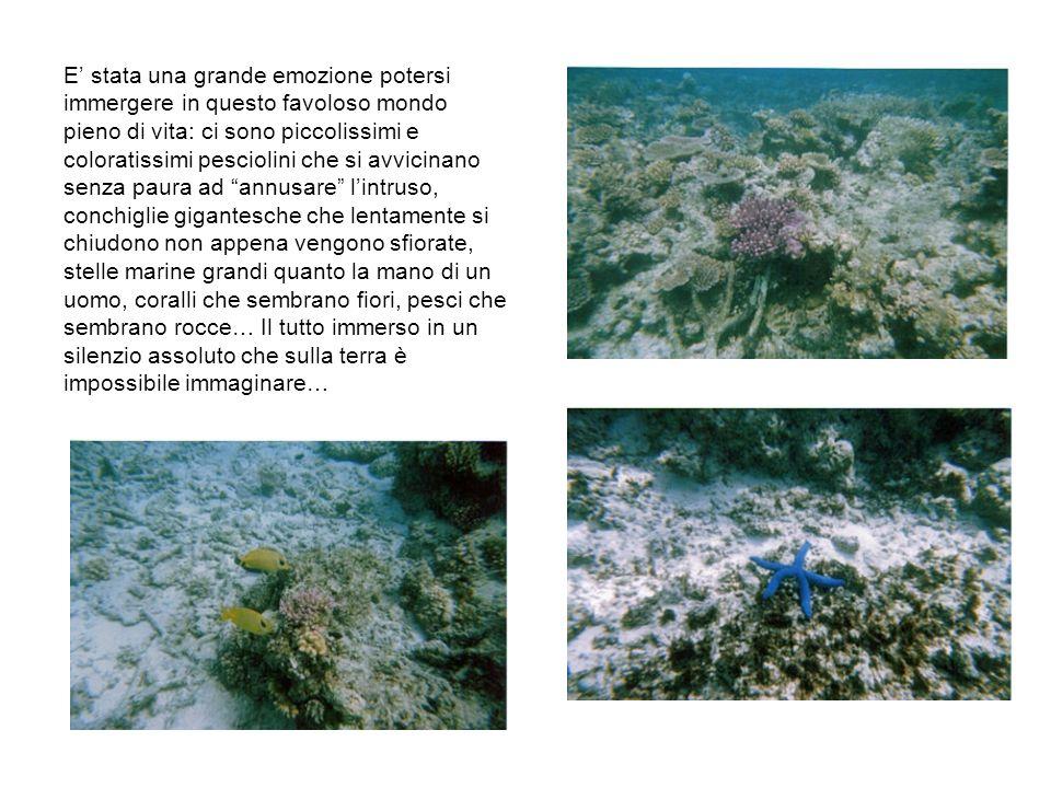 E stata una grande emozione potersi immergere in questo favoloso mondo pieno di vita: ci sono piccolissimi e coloratissimi pesciolini che si avvicinano senza paura ad annusare lintruso, conchiglie gigantesche che lentamente si chiudono non appena vengono sfiorate, stelle marine grandi quanto la mano di un uomo, coralli che sembrano fiori, pesci che sembrano rocce… Il tutto immerso in un silenzio assoluto che sulla terra è impossibile immaginare…