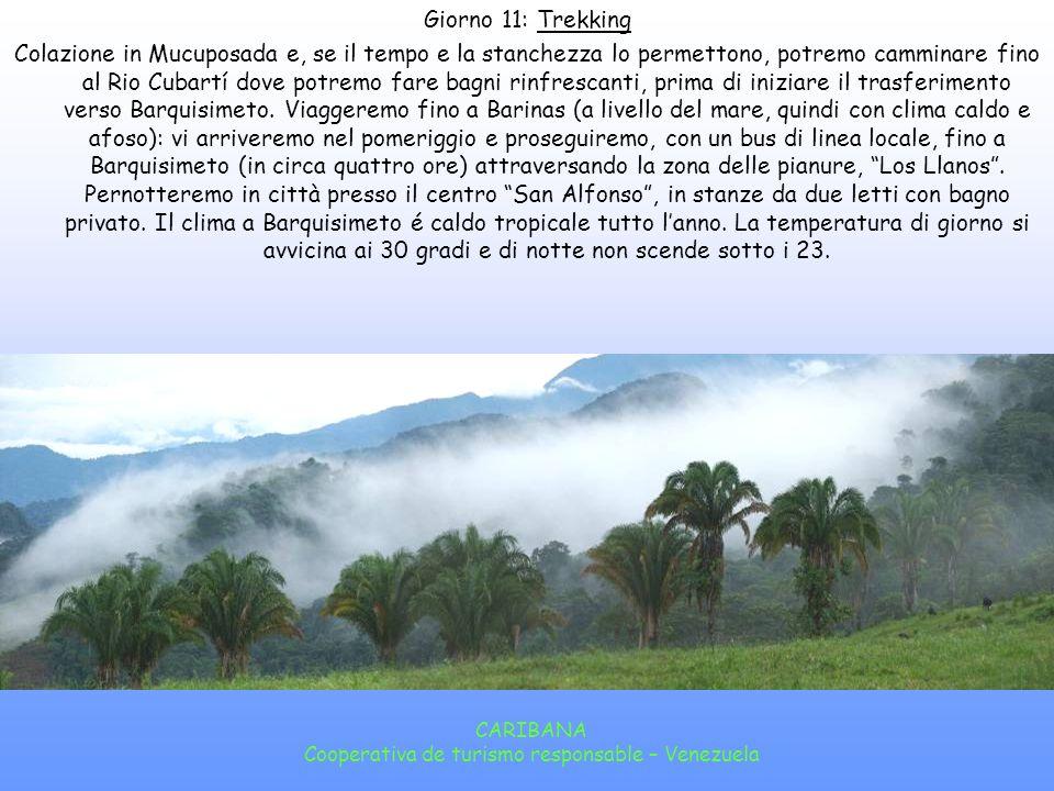 CARIBANA Cooperativa de turismo responsable – Venezuela Giorno 10: Trekking Dopo la colazione cammineremo tra piantagioni di caffé allombra dei boschi nublados andini fino al paese di Santa María de Canaguá, ai piedi della cordigliera andina, la Sierra Nevada.