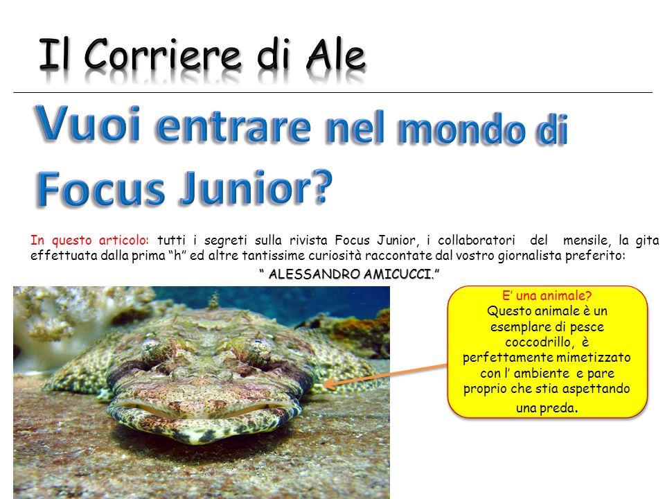 tutti i segreti della rivista Focus Junior, i collaboratori del mensile e la gita effettuata dalla prima h.