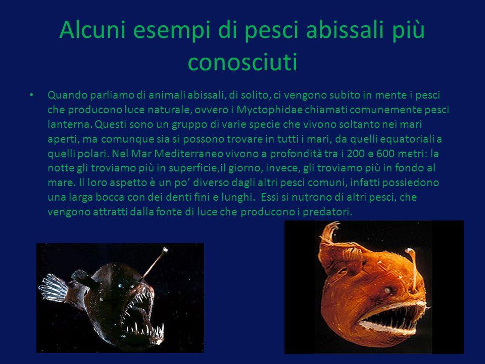 Alcuni esempi di pesci abissali più conosciuti Quando parliamo di animali abissali, di solito, ci vengono subito in mente i pesci che producono luce naturale, ovvero i Myctophidae chiamati comunemente pesci lanterna.
