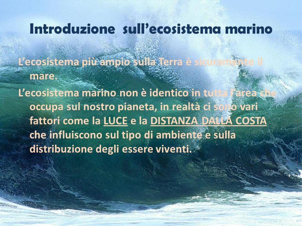 Introduzione sullecosistema marino Lecosistema più ampio sulla Terra è sicuramente il mare. Lecosistema marino non è identico in tutta larea che occup