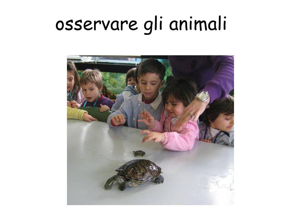 osservare gli animali