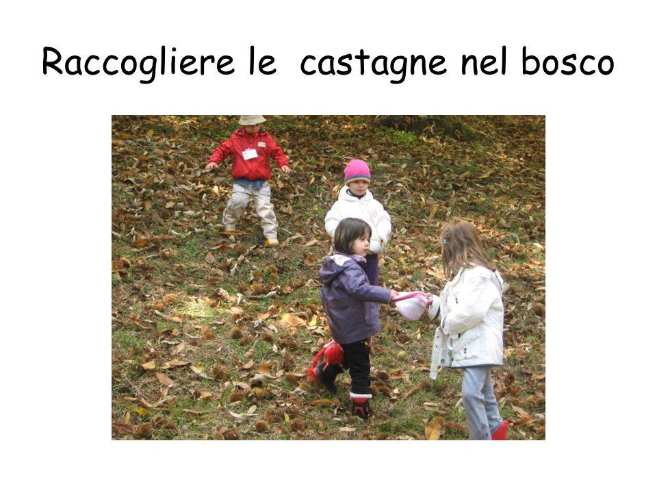 Raccogliere le castagne nel bosco