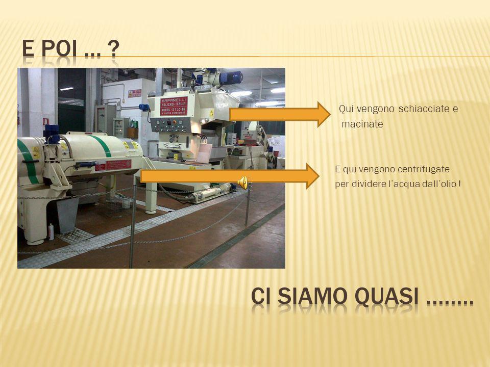 Le olive vengono schiacciate e macinate per almeno 40 minuti, polpa e nocciolo insieme.