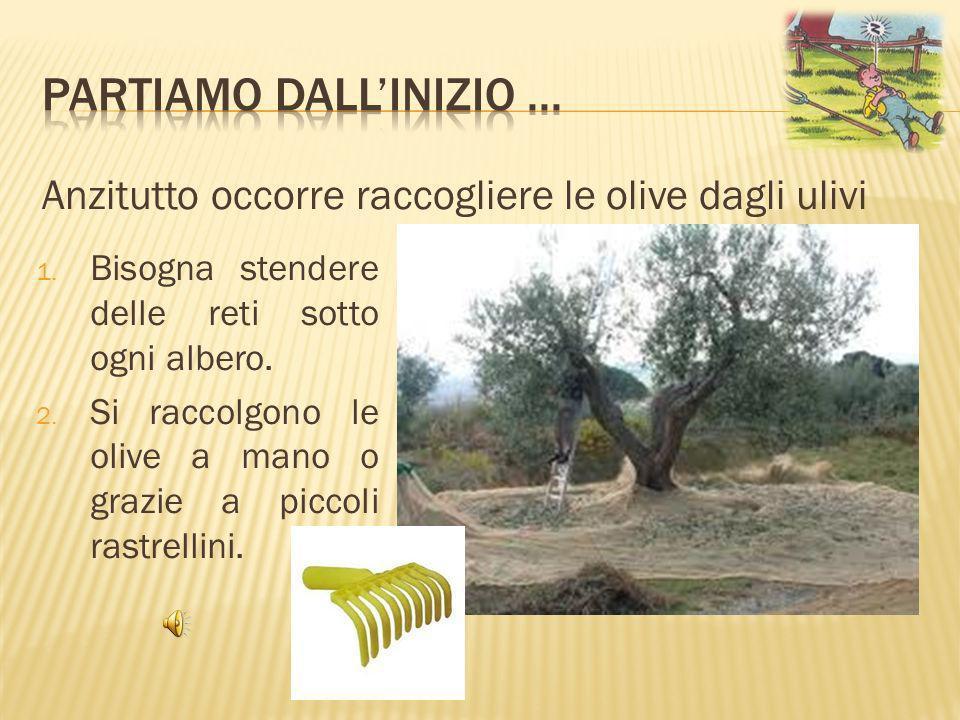 Lolio nuovo ha: colore verde opaco (non trasparente) sapore vivo quasi pizzichino profumo intenso Lolio prodotto così è il più prezioso ed è chiamato Extra vergine perché è lolio uscito dalla prima spremitura delle olive.