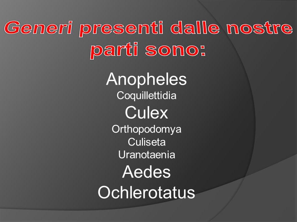 Anopheles Coquillettidia Culex Orthopodomya Culiseta Uranotaenia Aedes Ochlerotatus