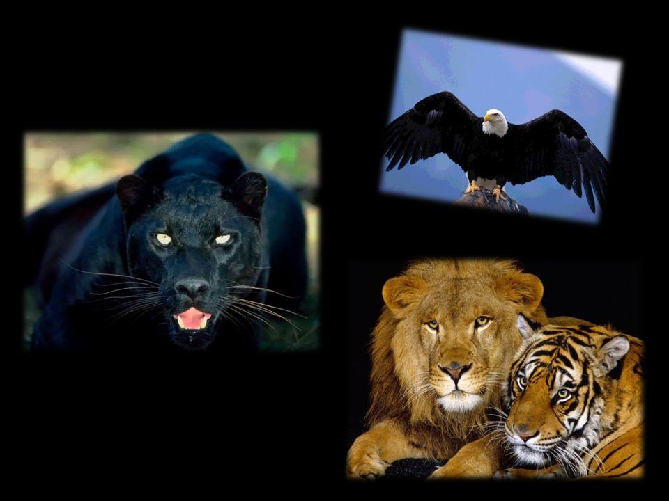 Tanti animali Sulla terra tanti animali tutti diversi, ma tanto uguali.