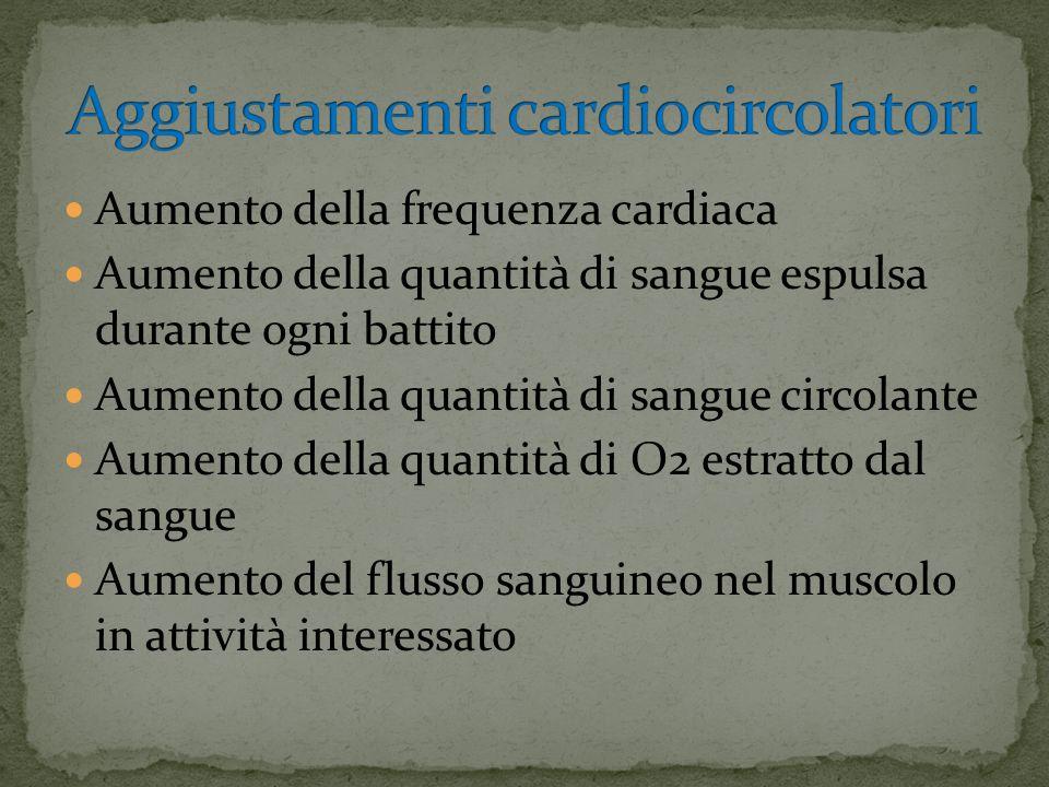 Aumento della frequenza cardiaca Aumento della quantità di sangue espulsa durante ogni battito Aumento della quantità di sangue circolante Aumento della quantità di O2 estratto dal sangue Aumento del flusso sanguineo nel muscolo in attività interessato