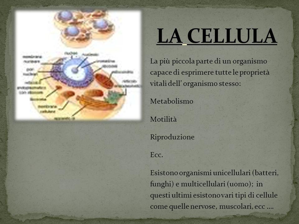 La più piccola parte di un organismo capace di esprimere tutte le proprietà vitali dell organismo stesso: Metabolismo Motilità Riproduzione Ecc.