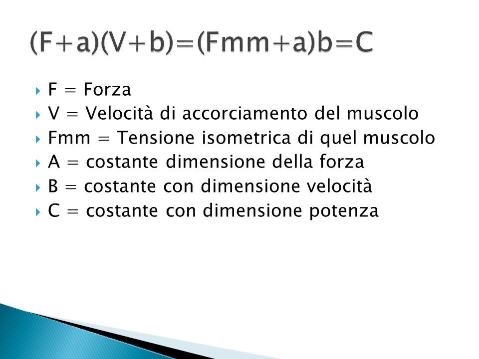 F = Forza V = Velocità di accorciamento del muscolo Fmm = Tensione isometrica di quel muscolo A = costante dimensione della forza B = costante con dimensione velocità C = costante con dimensione potenza