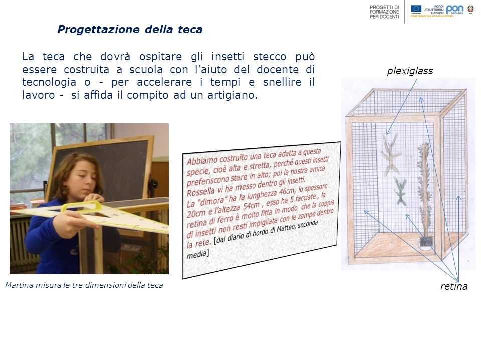 Progettazione della teca Martina misura le tre dimensioni della teca La teca che dovrà ospitare gli insetti stecco può essere costruita a scuola con l