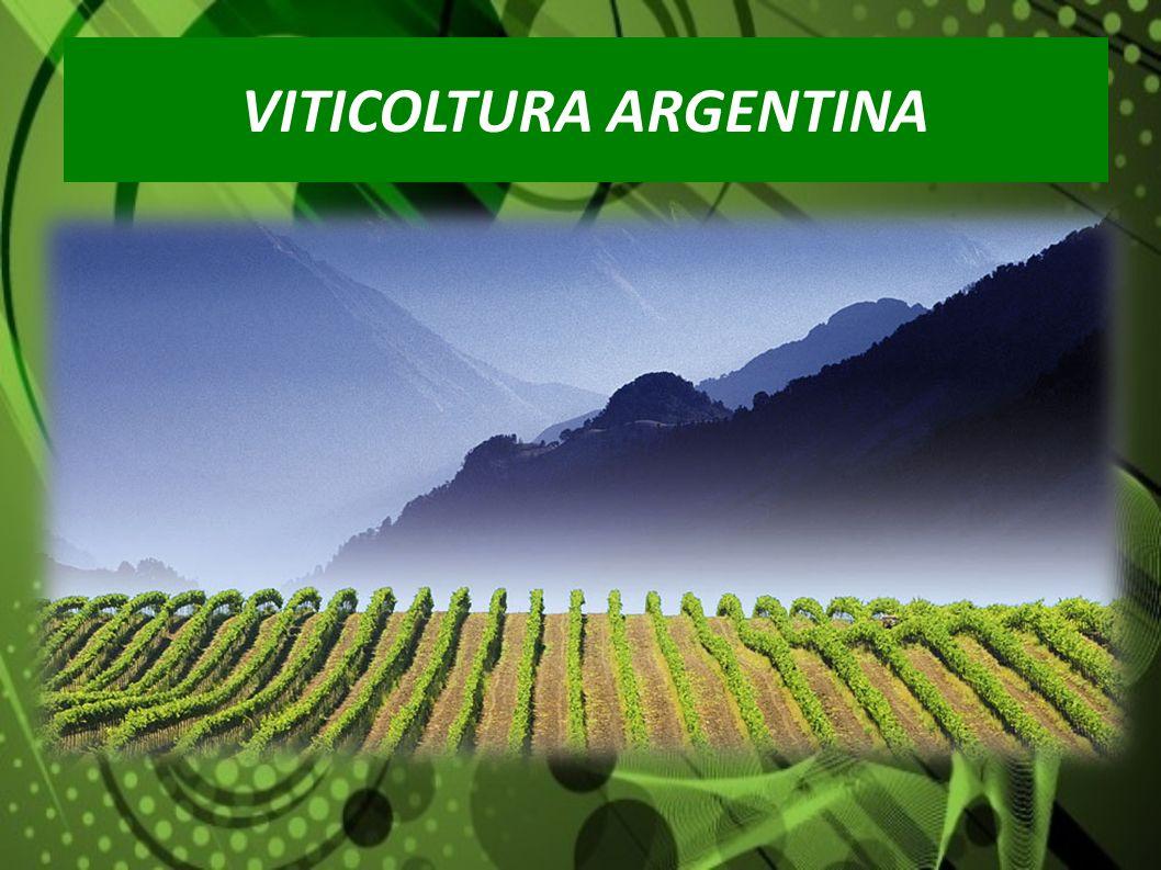 Superficie vitata 210.000 ha Produzione di vino 15 M-hL Superficie vitata 210.000 ha Produzione di vino 15 M-hL REGIONI PRODUTTRICI SUPERFICIE VITATA IN % Mendoza70% San Juan22% La Rioja5% Rio Negro1% Cafayate1% Altre1% VITICOLTURA ARGENTINA In cifre