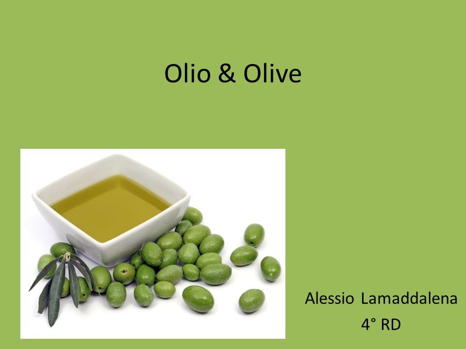 Olio & Olive Alessio Lamaddalena 4° RD