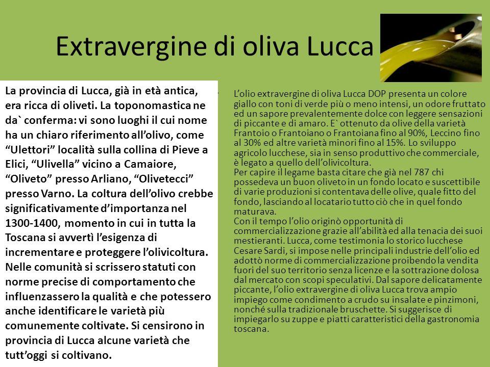 Extravergine di oliva Lucca DOP Lolio extravergine di oliva Lucca DOP presenta un colore giallo con toni di verde più o meno intensi, un odore fruttat