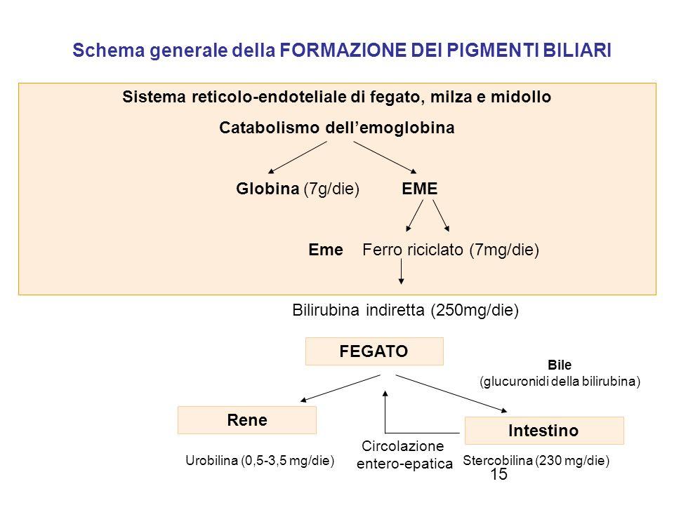15 Circolazione entero-epatica Schema generale della FORMAZIONE DEI PIGMENTI BILIARI Sistema reticolo-endoteliale di fegato, milza e midollo Catabolis