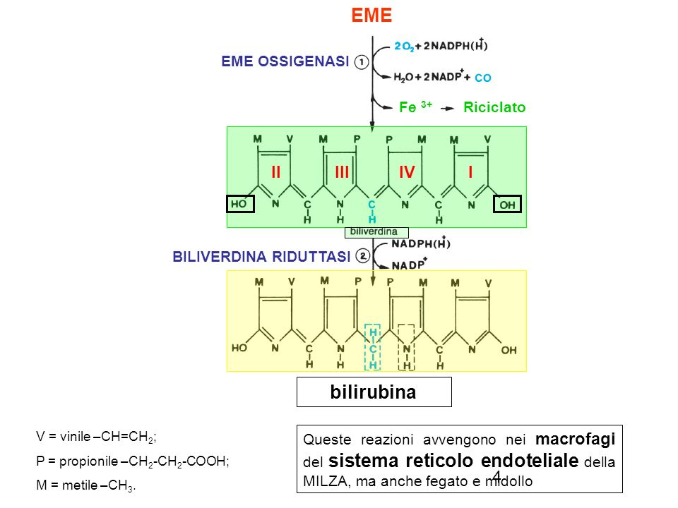 4 EME OSSIGENASI EME BILIVERDINA RIDUTTASI V = vinile –CH=CH 2 ; P = propionile –CH 2 -CH 2 -COOH; M = metile –CH 3. bilirubina Queste reazioni avveng