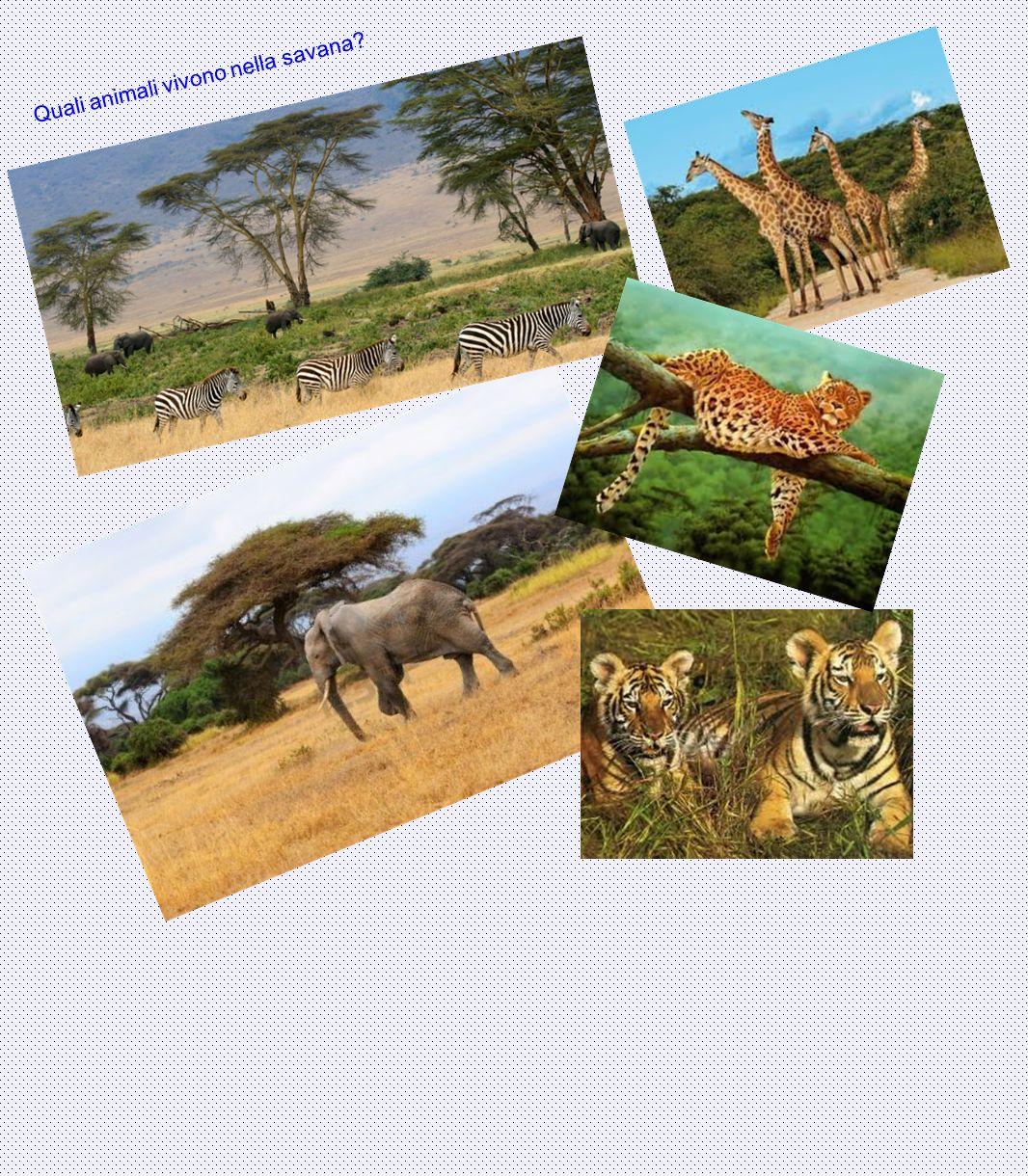 Quali animali vivono nella savana?