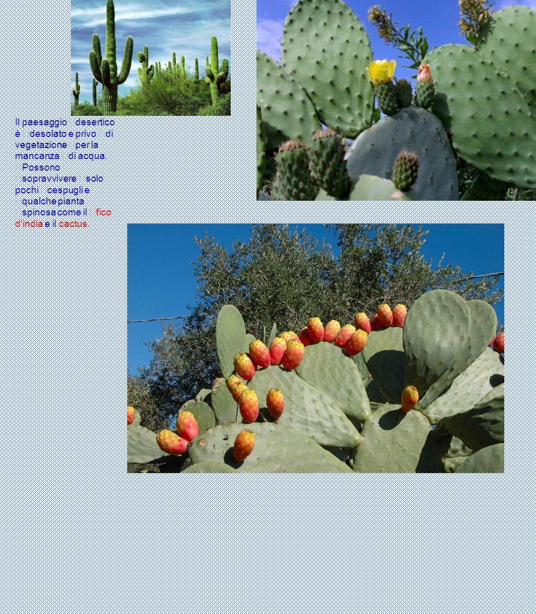 Il paesaggio desertico è desolato e privo di vegetazione per la mancanza di acqua. Possono sopravvivere solo pochi cespugli e qualche pianta spinosa c