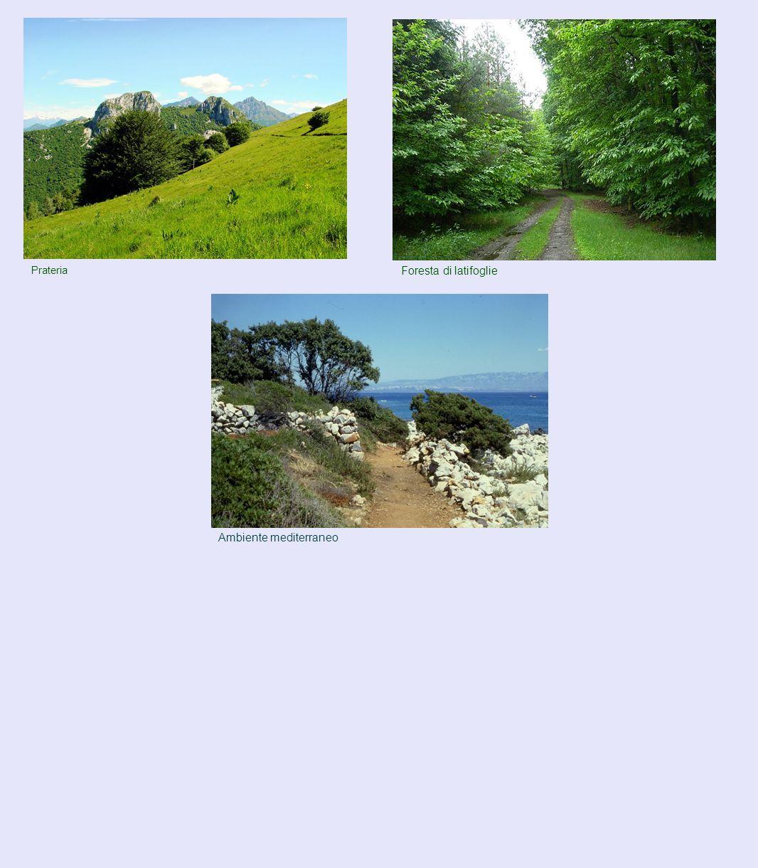 Prateria Foresta di latifoglie Ambiente mediterraneo