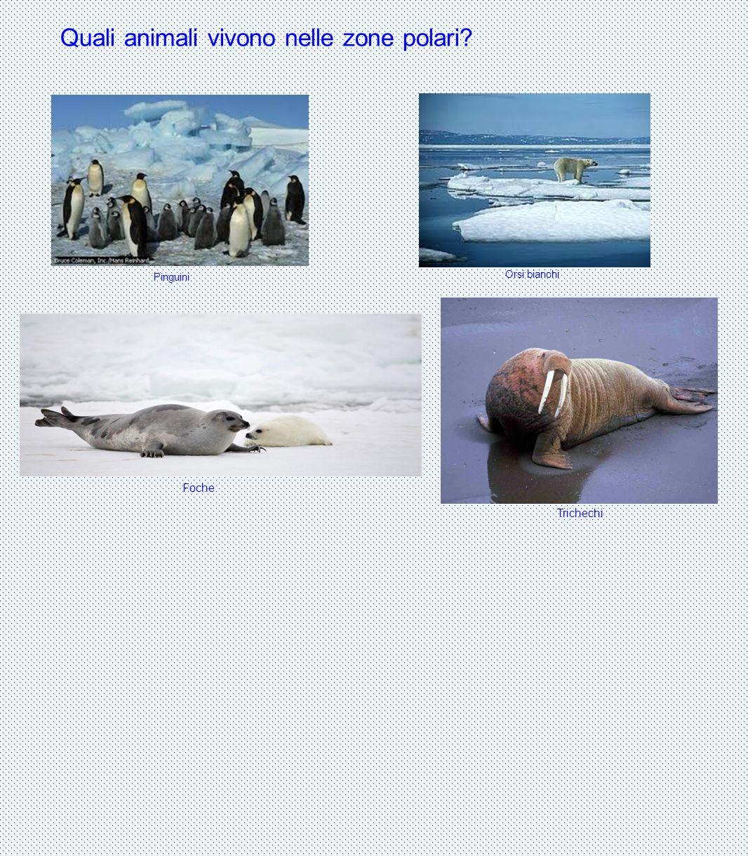 Quali animali vivono nelle zone polari? Pinguini Orsi bianchi Foche Trichechi