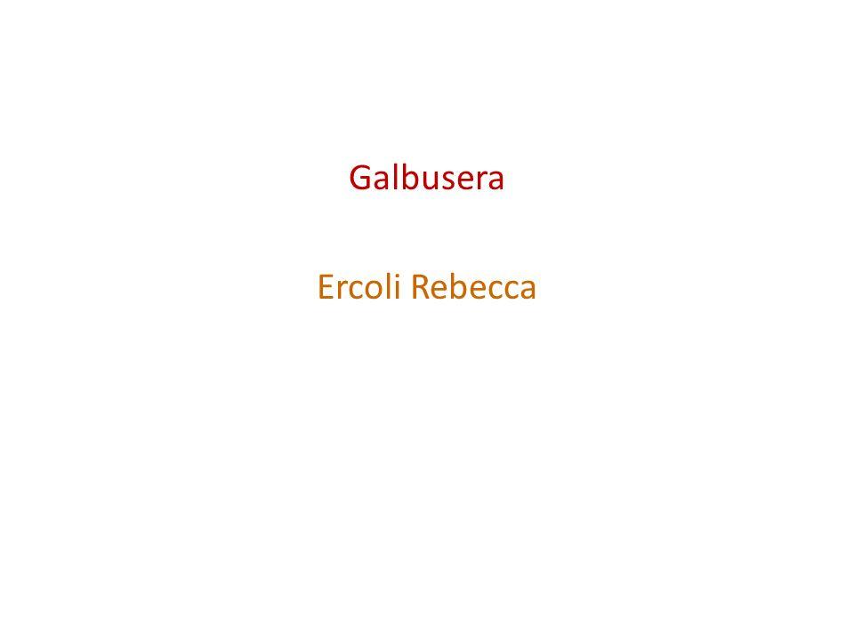 Galbusera Ercoli Rebecca