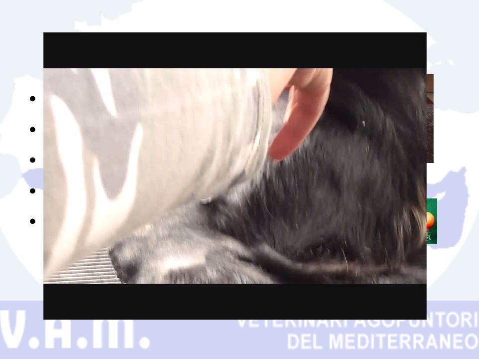 Campo veterinario Grosso limite il pelo Fuoco Ventose con pompetta Terapia principale o associata a moxa e/o ago e/o massaggio.