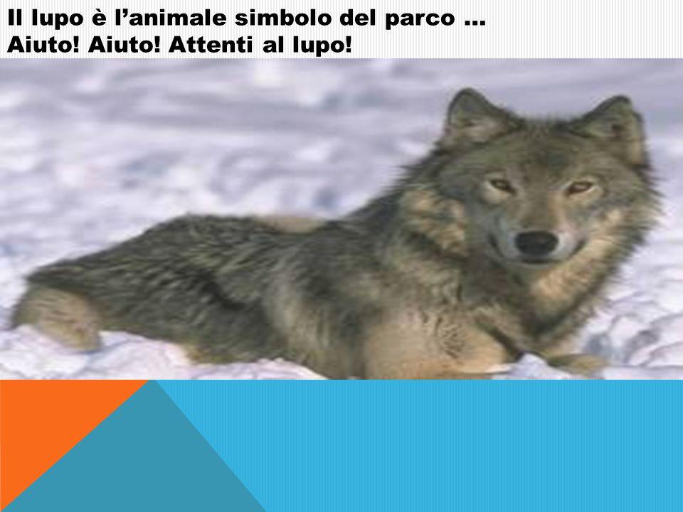 Il lupo è lanimale simbolo del parco … Aiuto! Aiuto! Attenti al lupo!