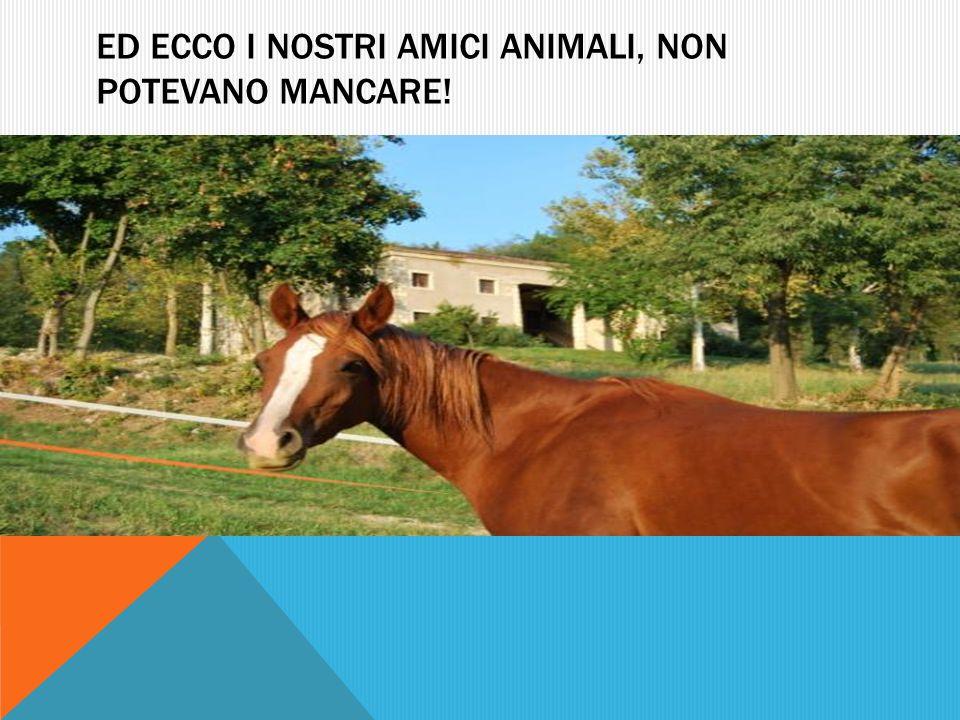 ED ECCO I NOSTRI AMICI ANIMALI, NON POTEVANO MANCARE!
