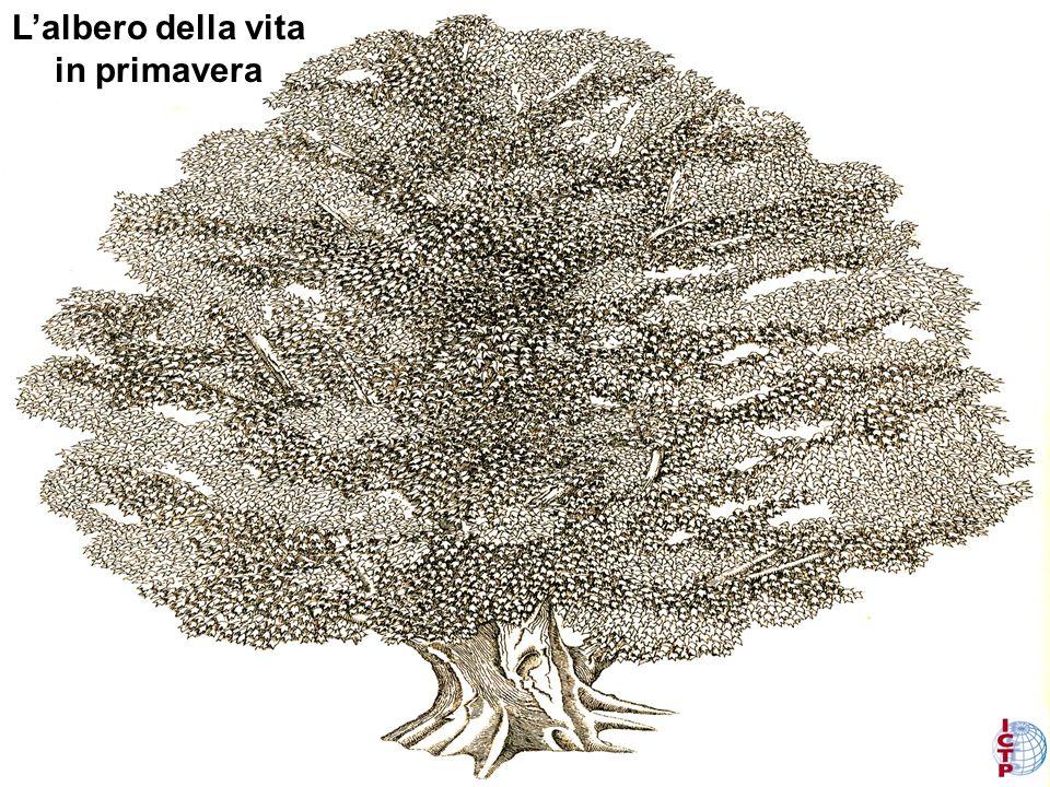 Lalbero della vita nellautunno La radice
