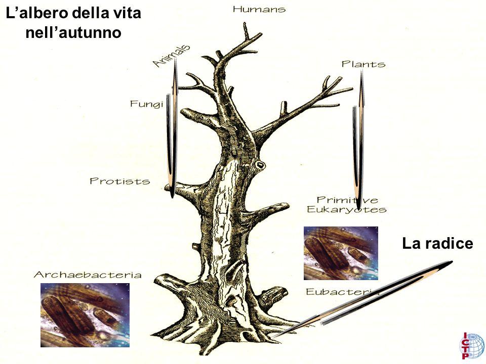 Informazione su Darwin e sullastrobiologia sono nel sito: http://www.ictp.it/~chelaf/ss180.html Oppure Google: Chela-Flores, Pagina Accademica